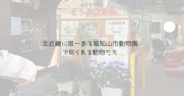 北近畿で唯一の動物園・福知山市動物園で見られる動物は?レッサーパンダもいたよ
