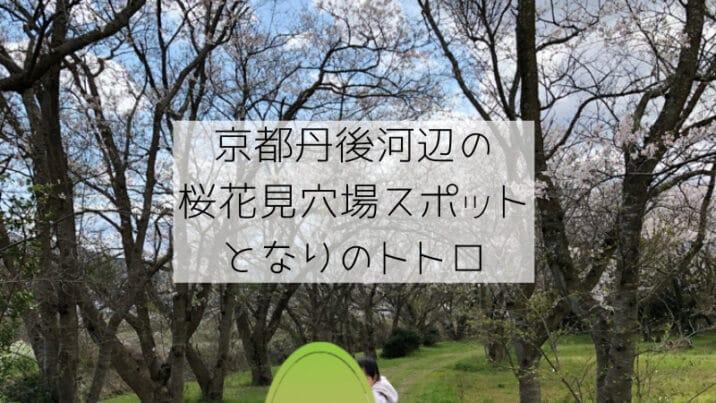 京都丹後桜花見の穴場スポット河辺