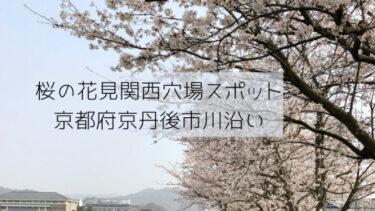 桜の花見関西の穴場スポット京都府京丹後市の川沿いが絶景!