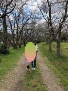 桜の木のトンネル