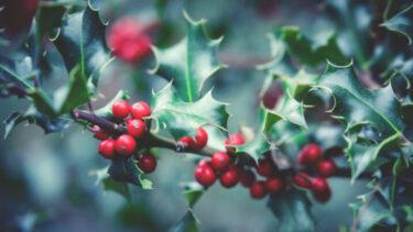 木へんに冬の読み方はなんて読む?名前にも使われるけどどのように使う?
