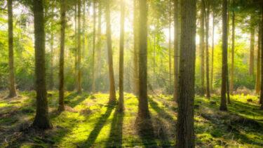 木へんに土の読み方は何なのかと木へんに土二つなら?漢字の読み方